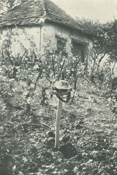 Photo: Soldier's grave in a vineyard